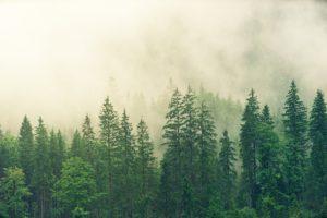 madera de los bosques